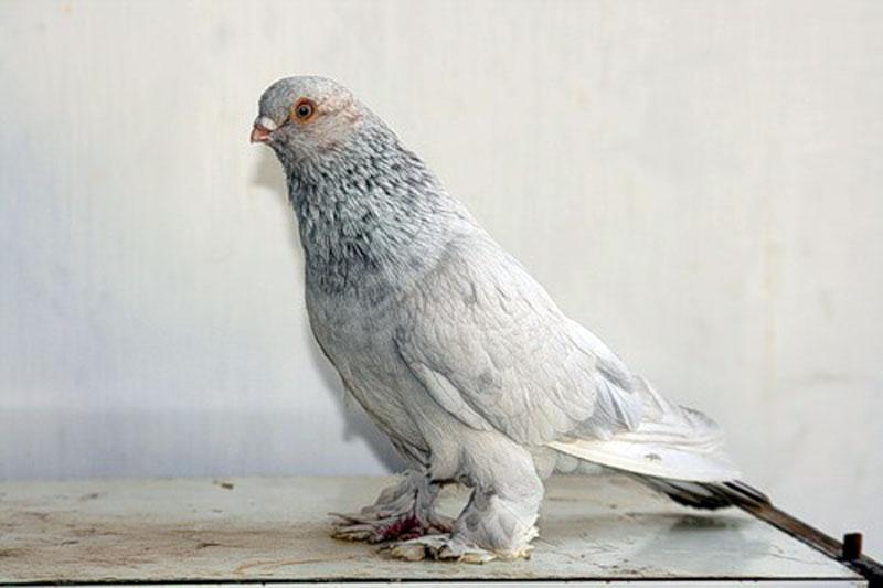Мраморный голубь Сочи памятник с крестом Чкаловская