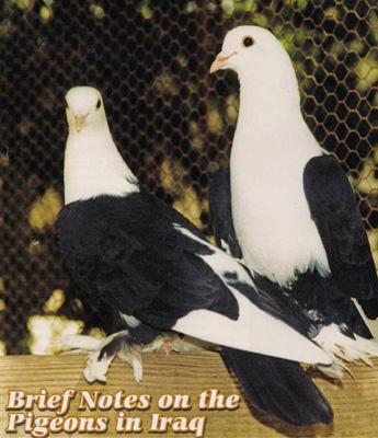 Молодые голубки на диване фото 114-388
