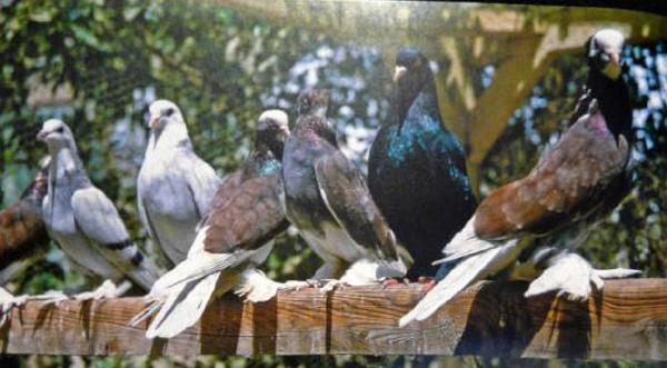 Молодые голубки на диване фото 114-373